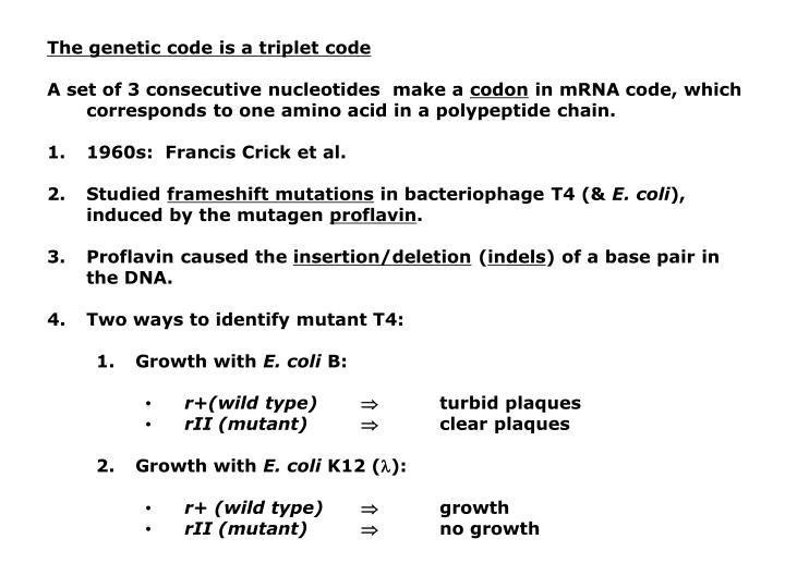 The genetic code is a triplet code