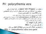 pv polycythemia vera