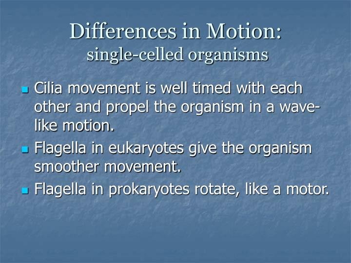 Differences in Motion: