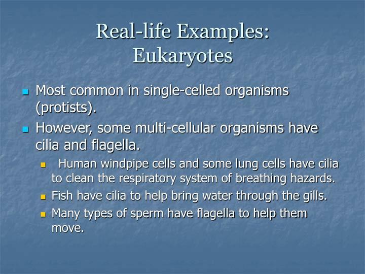 Real life examples eukaryotes