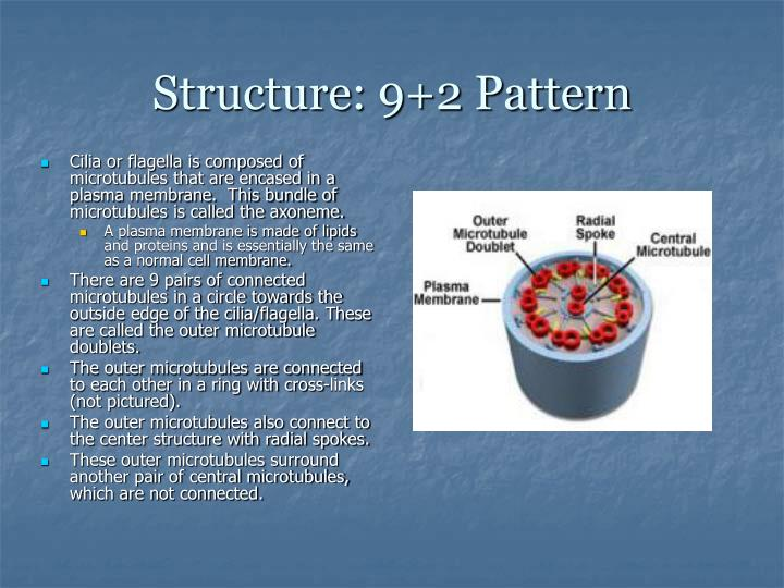 Structure: 9+2 Pattern