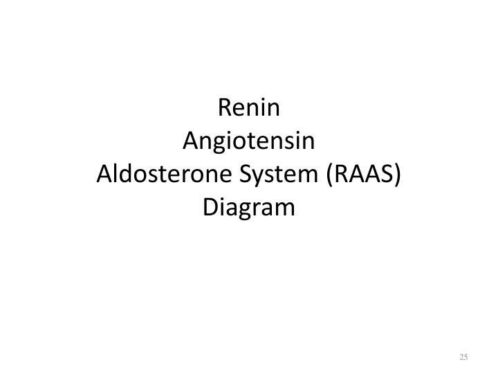 Ppt Homeostasis And The Stress Response Powerpoint Presentation. Reninangiotensinaldosterone System Raasdiagram Renin Angiotensin Aldosterone. Wiring. Aldosterone Hormone Feedback Loop Homeostasis Diagram For At Scoala.co