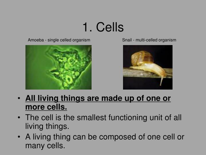 1. Cells