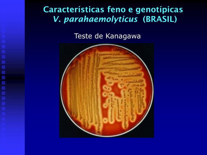Características feno e genotípicas