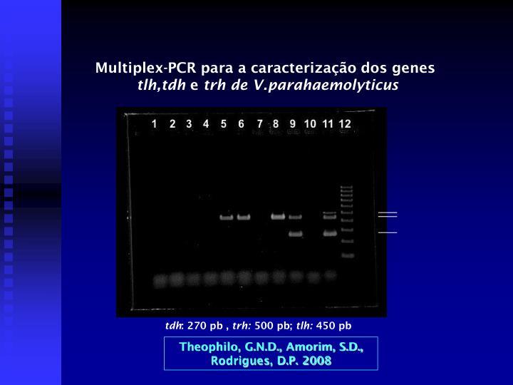 Multiplex-PCR para a caracterização dos genes