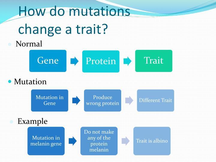 How do mutations change a trait?
