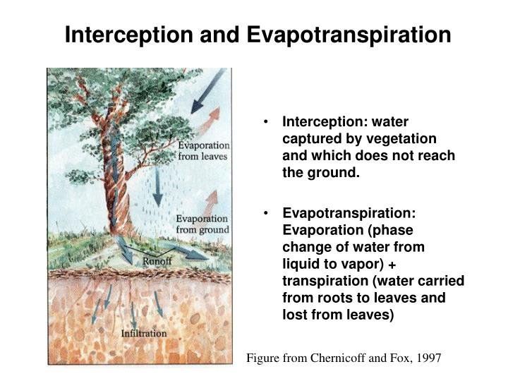 Interception and Evapotranspiration