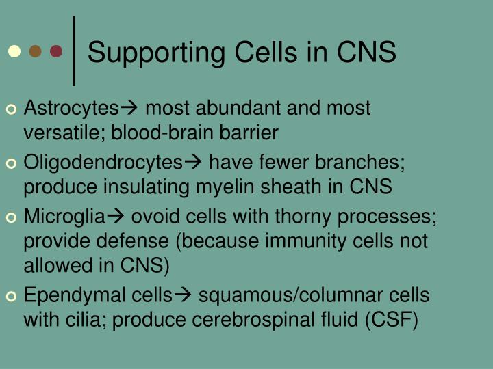 Supporting Cells in CNS