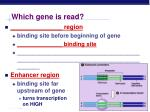 which gene is read