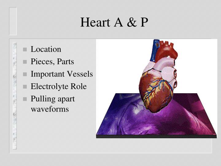 Heart a p