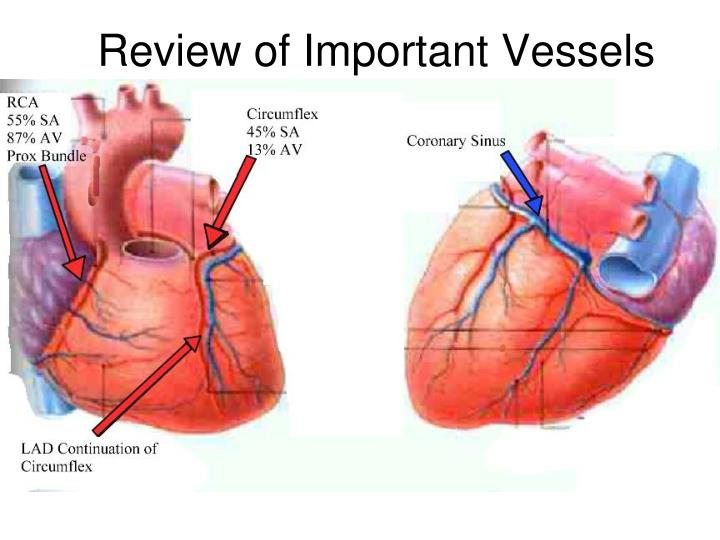 Review of Important Vessels
