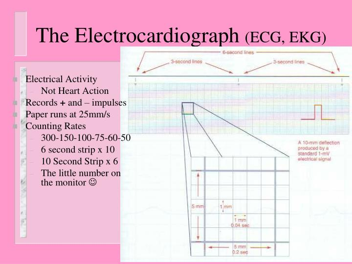 The Electrocardiograph