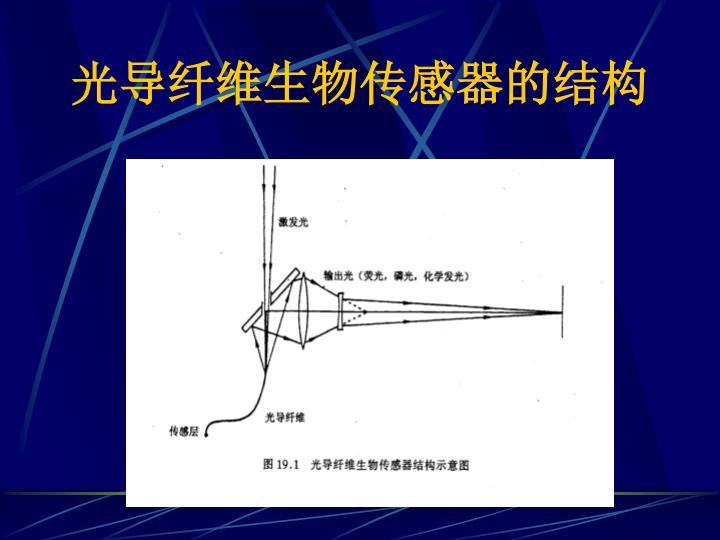 光导纤维生物传感器的结构