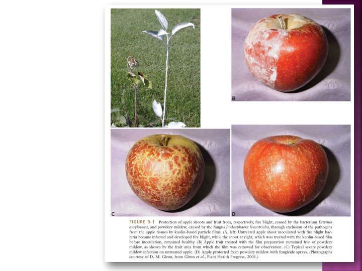 Dasar dasar perlindungan tanaman