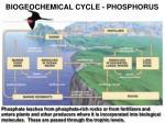 biogeochemical cycle phosphorus