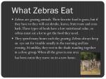 what zebras eat