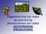 organisms that can make glucose during photosynthesis are called autotrophs producers