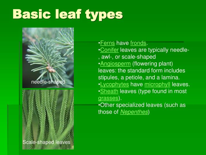 Basic leaf types