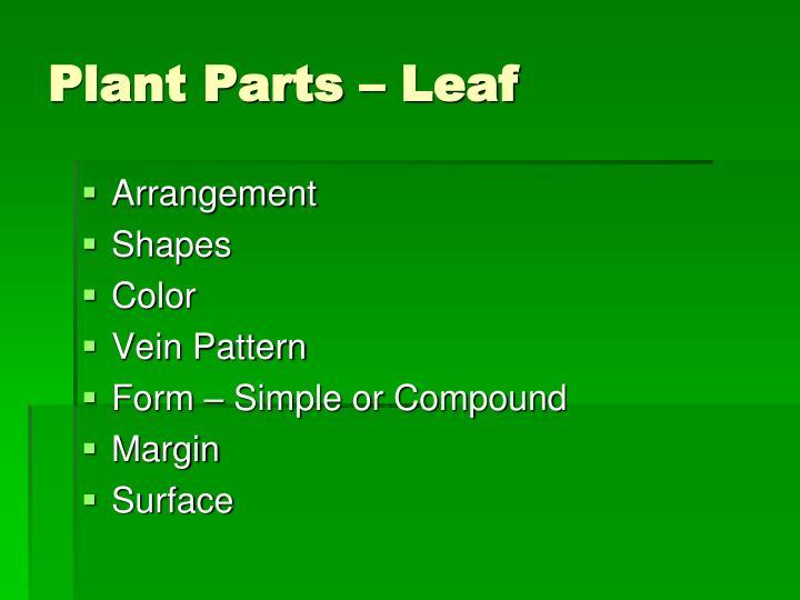 Plant Parts – Leaf
