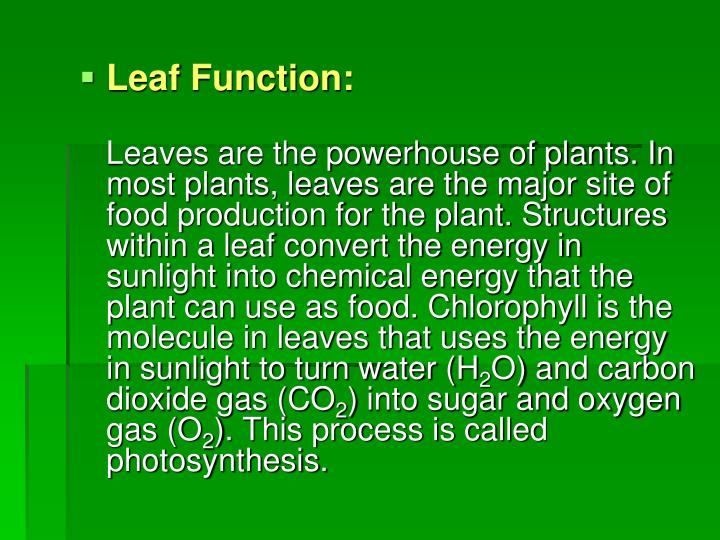 Leaf Function: