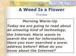 a weed is a flower thursday