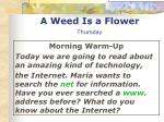 a weed is a flower thursday1
