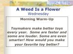 a weed is a flower wednesday