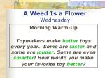 a weed is a flower wednesday1