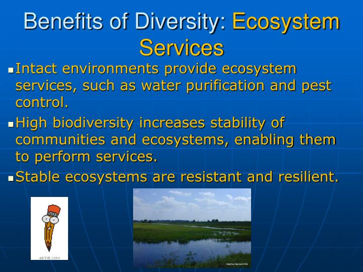water biodiversity and ecosystem Water hyacinth, an invasive species ecosystems and biodiversity will be forced to fluctuate along with the it explains biodiversity and climate change in a.