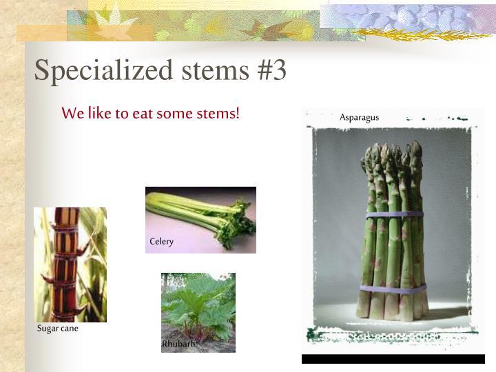 Specialized stems #3
