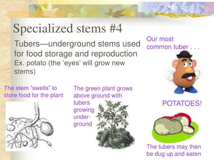 Specialized stems #4