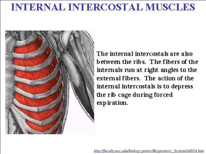http://faculty.ucc.edu/biology-potter/Respiratory_System/sld014.htm