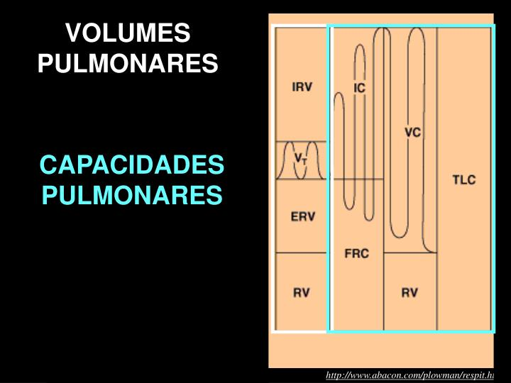 VOLUMES PULMONARES