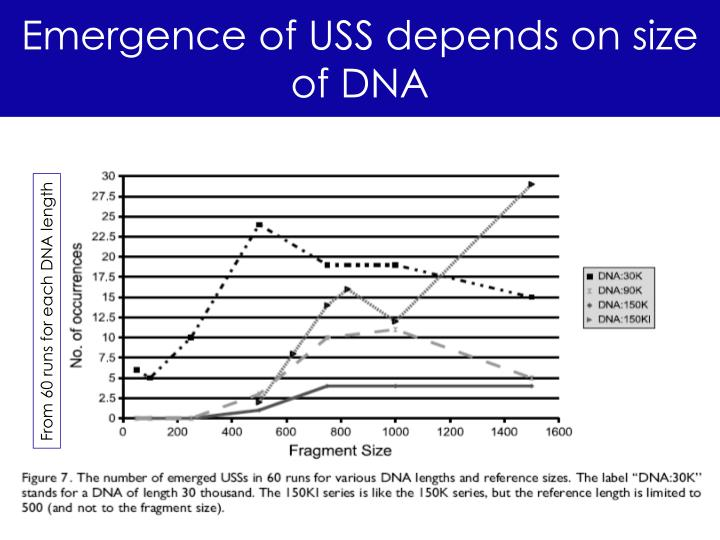Emergence of USS depends on size of DNA