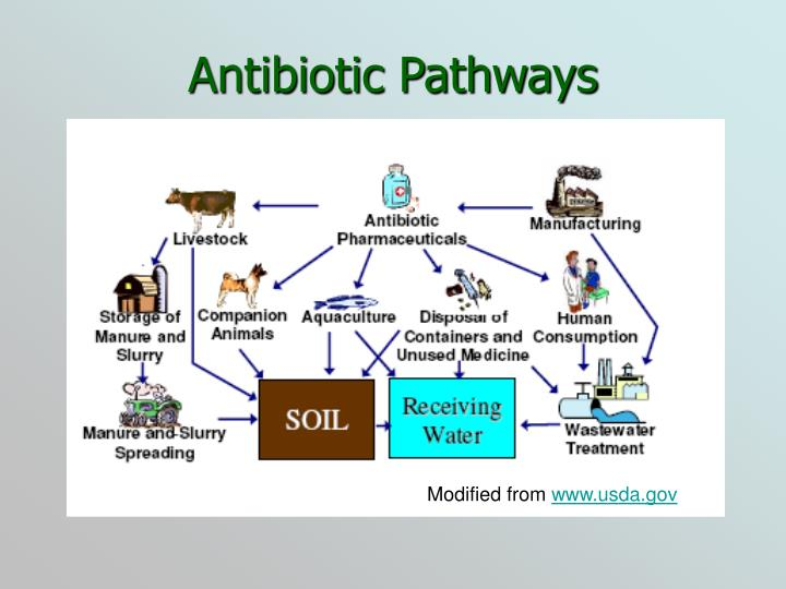 Antibiotic Pathways