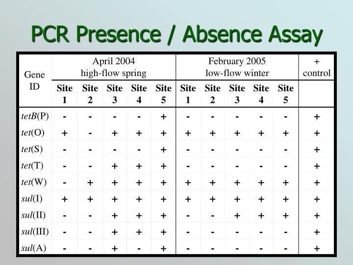 PCR Presence / Absence Assay