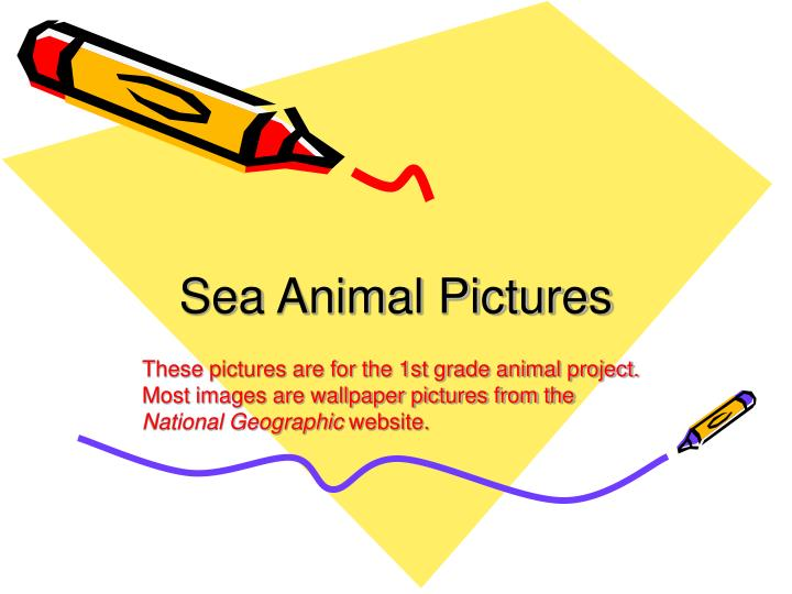 sea animal pictures n.