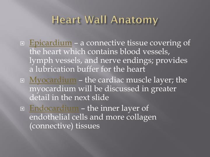 Heart Wall Anatomy