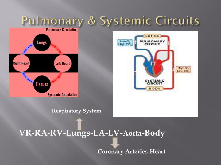 Pulmonary & Systemic Circuits