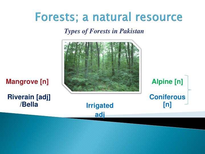 forests a natural resource n.