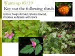 warm up 05 19 key out the following shrub