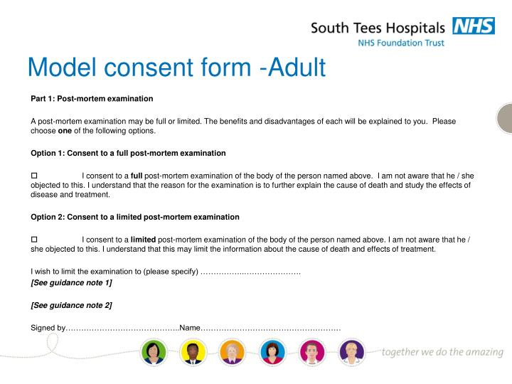Model consent form -Adult