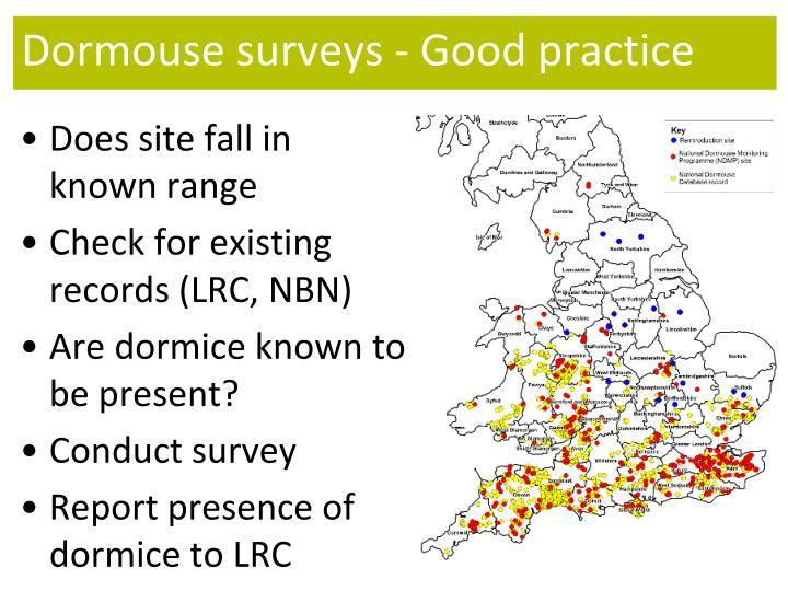 Dormouse surveys - Good practice
