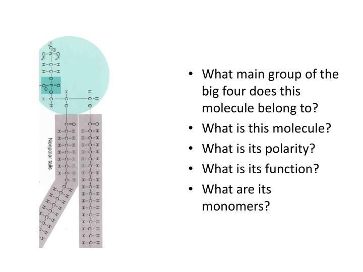 What main group of the big four does this molecule belong to?
