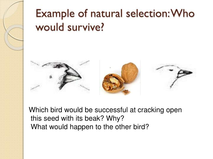 PPT - Darwin's Theory of Evolution PowerPoint Presentation - ID:6399009