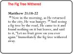 the fig tree withered