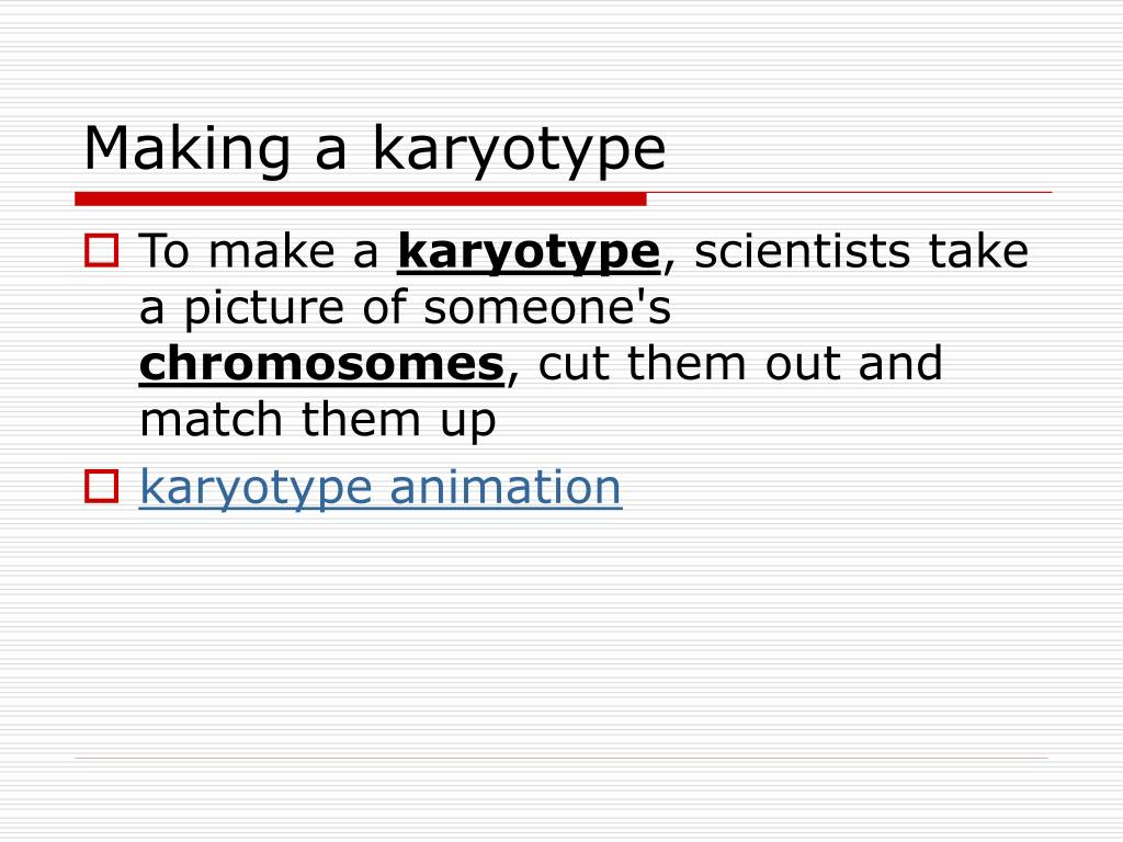 PPT - karyotypes and genetic disorders PowerPoint ...