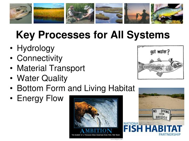Key Processes for All Systems