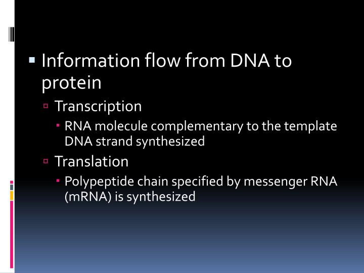 Information flow from DNA to protein