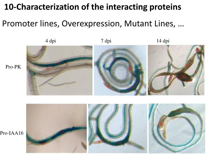 10-Characterization of the interacting proteins